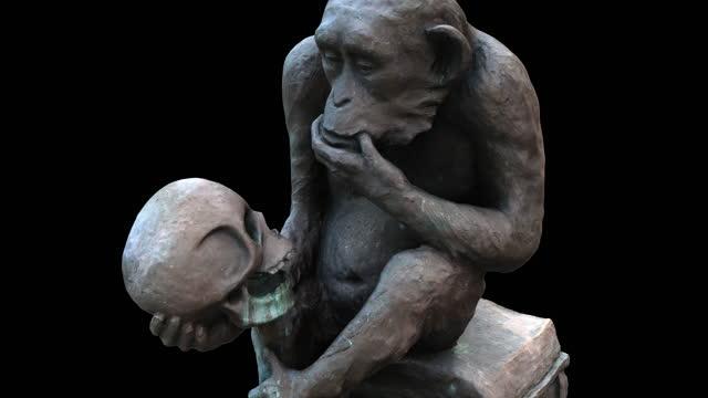 vídeos de stock e filmes b-roll de ape whith skull - zoom in - evolução
