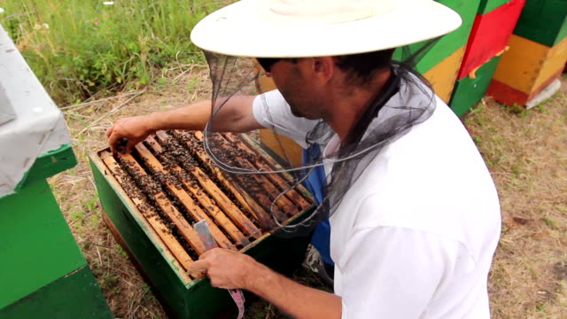 vídeos de stock e filmes b-roll de apiarist, beekeeper is checking bees on honeycomb wooden frame - engradado