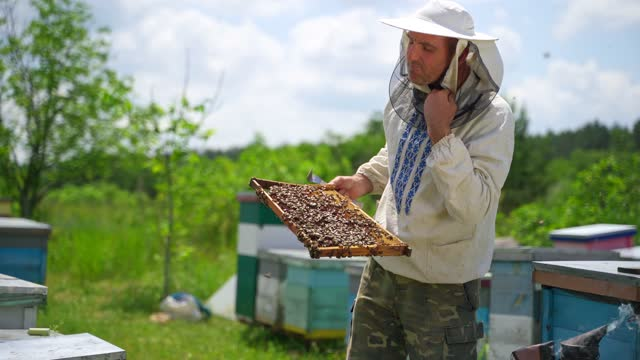 Apiarist with bee frame full of bees. Beekeeper inspecting honeycomb with bees on the apiary in summer. Beekeeping concept. Apiarist with bee frame full of bees. Beekeeper inspecting honeycomb with bees on the apiary in summer. Beekeeping concept. arthropod stock videos & royalty-free footage