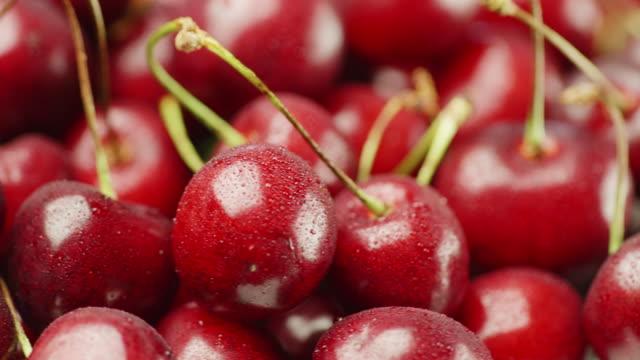aptitretande röda körsbär. på bären små droppar vatten - tallrik uppätet bildbanksvideor och videomaterial från bakom kulisserna