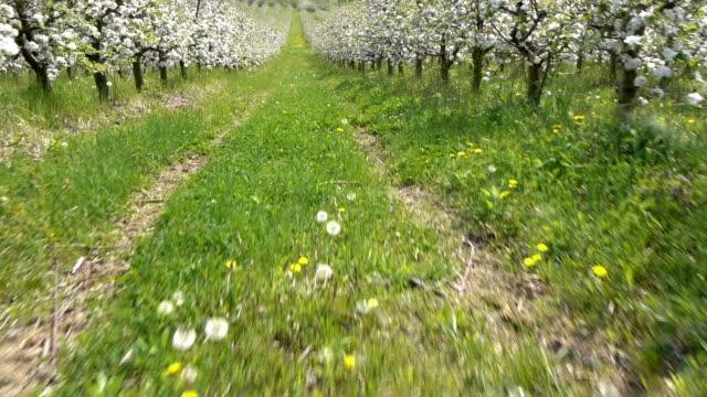 Apple farm video