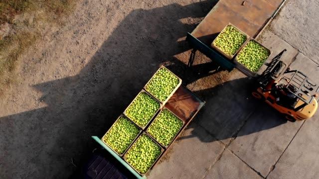 zbiorów jabłek. wózki widłowe ładują ciężarówki z drewnianymi skrzyniami, pełne świeżo zebranych jabłek, na zewnątrz. ciężarówka przenosi skrzynie do magazynu w celu przechowywania. aero. widok z góry - rozładowywać filmów i materiałów b-roll