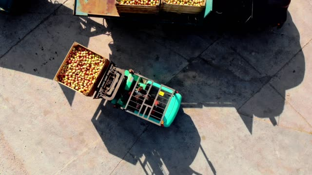 zbiorów jabłek. wózek widłowy rozładowuje ciężarówkę, pełną drewnianych skrzyń ze świeżo zebranymi jabłkami, na zewnątrz. ładowarka przenosi pudełka jabłek do magazynu w celu przechowywania. aero. widok z góry - rozładowywać filmów i materiałów b-roll