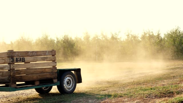 Apple harvest. the tractor carries empty wooden crates, boxes in farm orchard. sunset, autumn sunny evening. Agriculture video