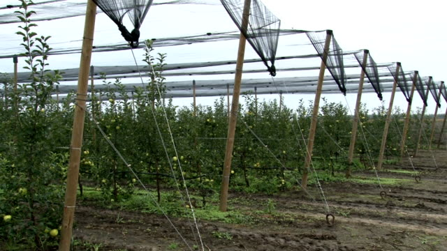 apfelplantagen mit hagelnetzen - netzgewebe stock-videos und b-roll-filmmaterial