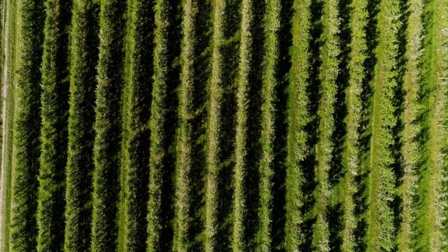 äppelträdgård - fruktträdgård bildbanksvideor och videomaterial från bakom kulisserna
