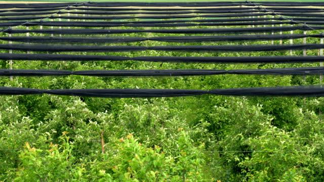 apfelgarten mit schneckenschutznetzen - netzgewebe stock-videos und b-roll-filmmaterial