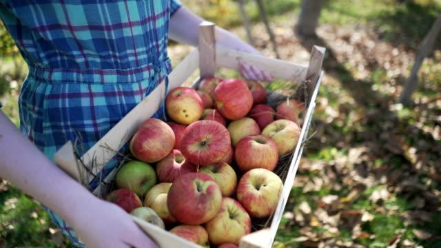 vídeos de stock e filmes b-roll de apple picking season - picking fruit
