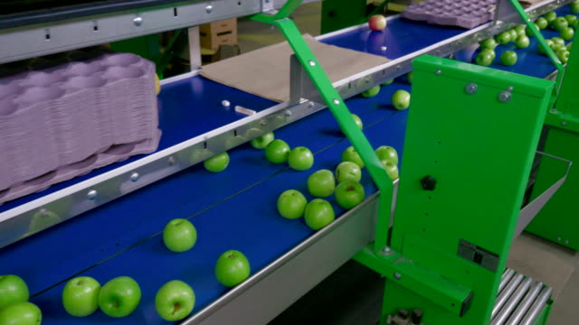 Apple Processing, Packing on a Conveyor Belt.Food Industry video