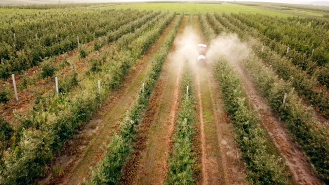 apple tree spraying with a tractor - insetticida video stock e b–roll