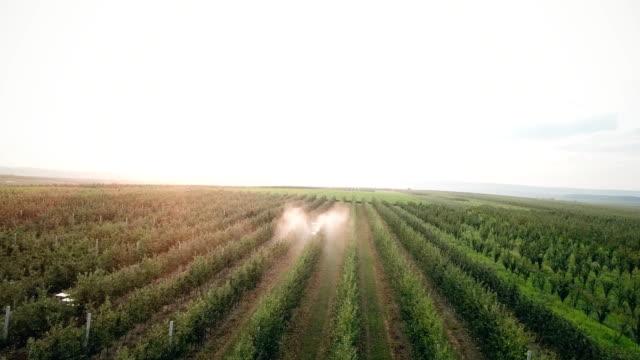 apple tree spraying with a tractor - fertilizzante video stock e b–roll