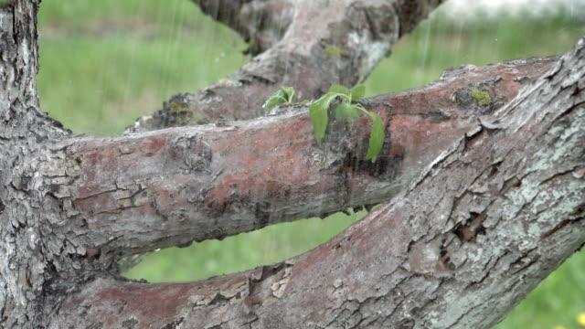 stockvideo's en b-roll-footage met apple boomstam in de regen - schors