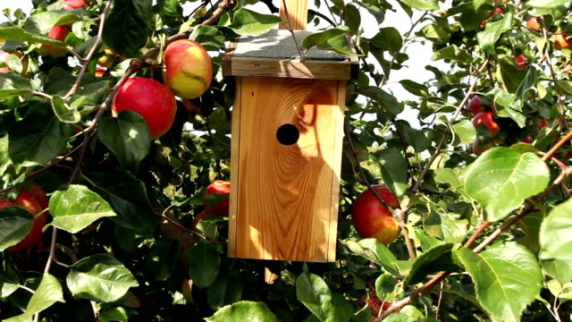 apple tree with bird house video