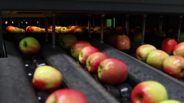 apples automatic industrial selection recognition - video