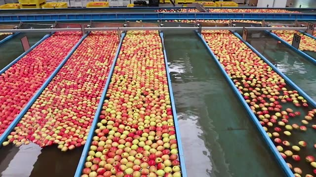apples divided by color and size by a industrial system in a factory - video