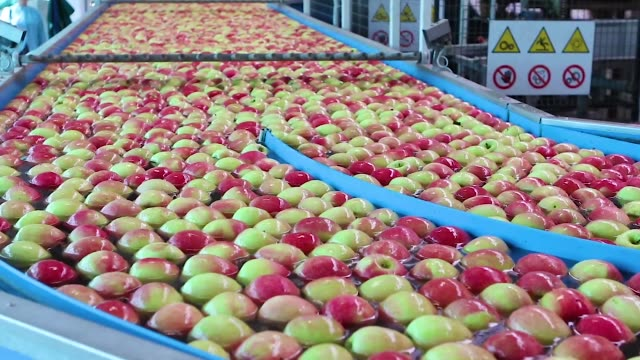 apples floating in water in a industrial machine system - video