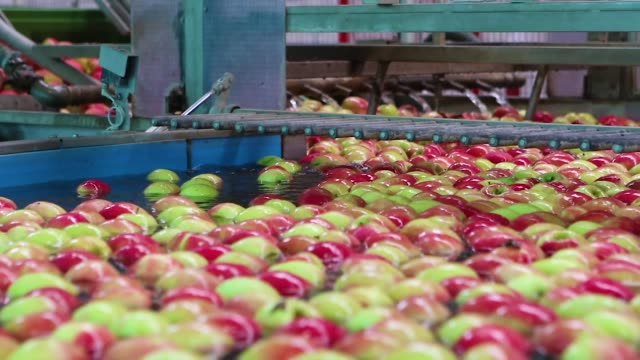 apples floating in water in a industrial machine system video
