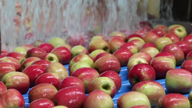 apples washed by a industrial machine system - video