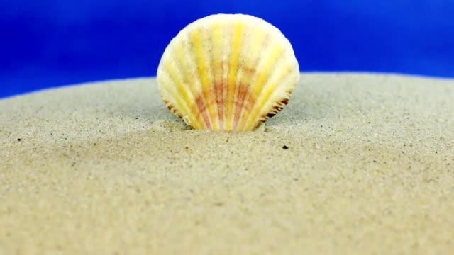 vídeos de stock e filmes b-roll de approaching seashell sticking out of the sand, close-up. - bugio