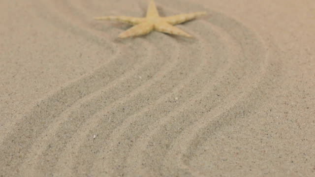 vídeos de stock e filmes b-roll de approximation of a beautiful yellow starfish lying on a zigzag made of sand. - bugio