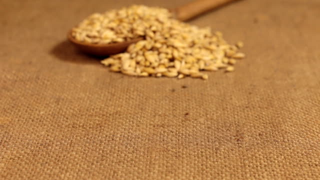 Approximation of a wooden spoon overflowing with barley grains, lying on burlap video