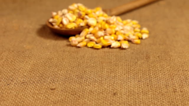Approximation of a wooden spoon overflowing with corn grains, lying on burlap video