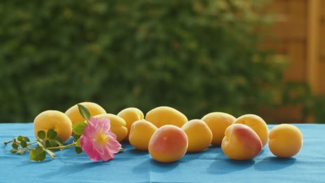 apricots and dog rose on a table - albicocca video stock e b–roll