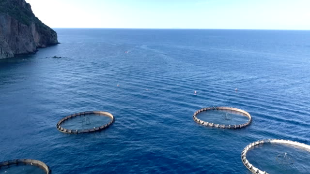Aquaculture Aerial View - video
