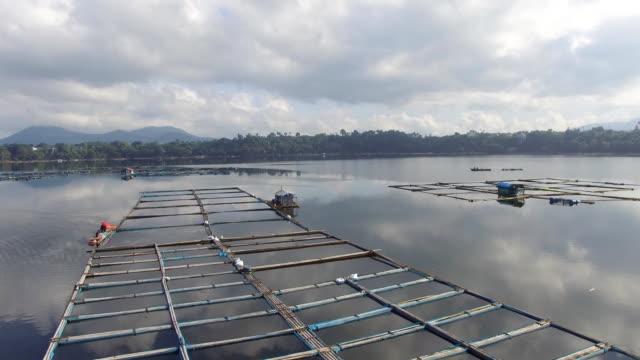 aquaculture fish farming sustain livelihood of small rural fishing community in Sampaloc Lake, Laguna. drone, aerial shot video