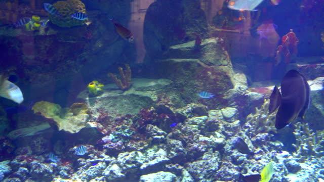 Aquarium Fish Tank Coral Reef Animals Nature Stock Video More