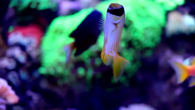aquarium fish aquarium fish cleaner shrimp stock videos & royalty-free footage