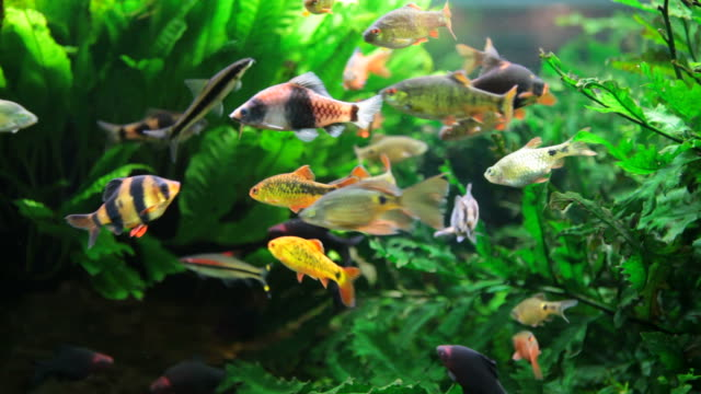 aquarium full of colorfull fish - akvarium byggnad för djur i fångenskap bildbanksvideor och videomaterial från bakom kulisserna