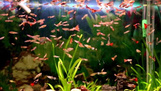 aquarium mit colorfull fish - süßwasserfisch stock-videos und b-roll-filmmaterial