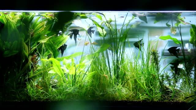 aquarium on background of the window - akvaryum stok videoları ve detay görüntü çekimi