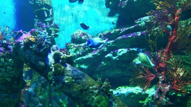 水族館公共用魚和珊瑚熱帶多彩的魚類影片