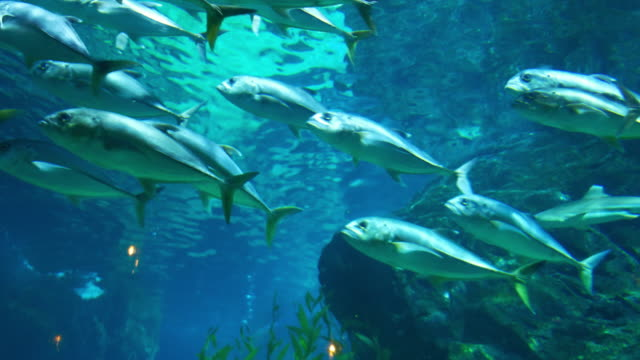 aquarium public with fishes and corals tropical colorful fishes video