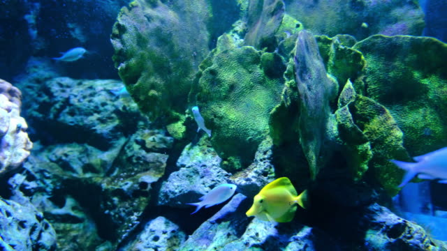 aquarium public with fishes and corals - морская рыба стоковые видео и кадры b-roll