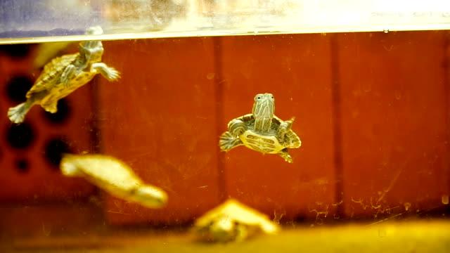 Aquarium. Small turtles swim in the aquarium - video