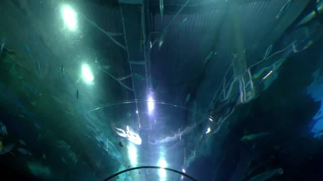 Aquarium tunnel fish above video
