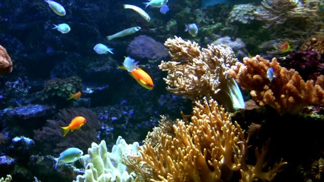 aquarium - akvarium byggnad för djur i fångenskap bildbanksvideor och videomaterial från bakom kulisserna