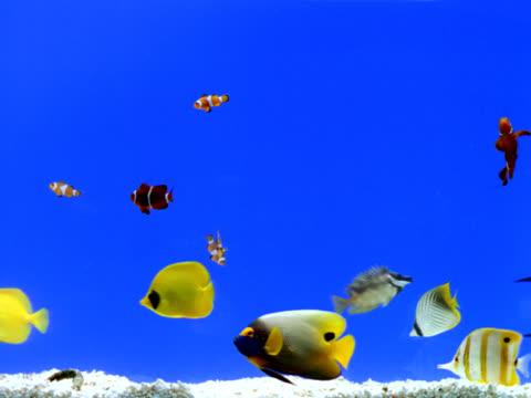 vídeos de stock e filmes b-roll de aquário - peixe
