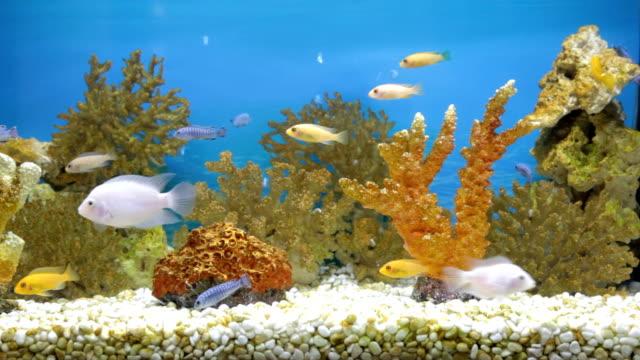 - aquarium - süßwasserfisch stock-videos und b-roll-filmmaterial