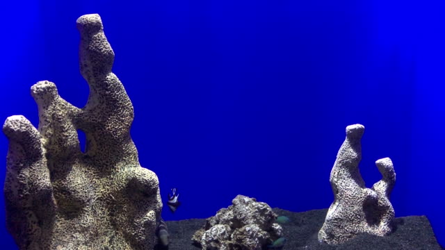 vídeos y material grabado en eventos de stock de acuario con fondo azul, caja azul vista al mar vida, peces tropicales de agua, arrecifes de coral y peces - sea life park