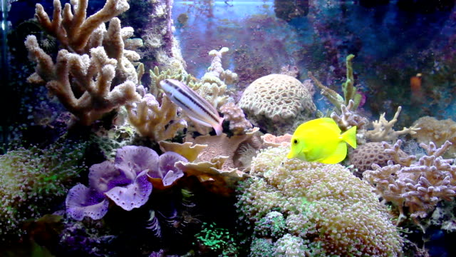 aquarium with fish and corral video