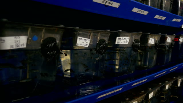 Aquariums With Zebra Danios on Laboratory Shelves video
