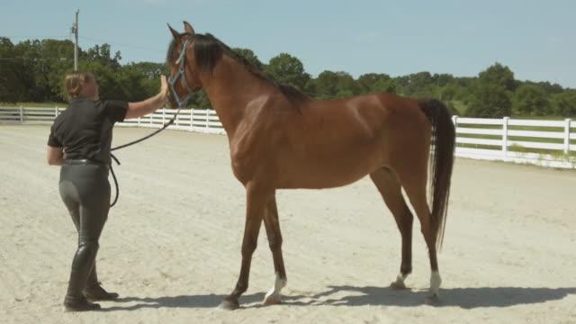 vídeos y material grabado en eventos de stock de arabian horse ranch con entrenador training horses 4k video series - training