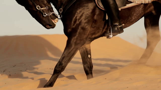 Arabian horse rider riding on desert in Dubai Arabian horse rider riding black male horse on desert in Dubai. Wind moves the sand of dunes falcon bird stock videos & royalty-free footage