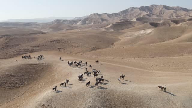 çölde arap ata biniyor. kayalıklar ve kırsal arazi yakınında güzel bir çöl manzara dayanıklılık yarışı , havadan çekim - bakir yer stok videoları ve detay görüntü çekimi