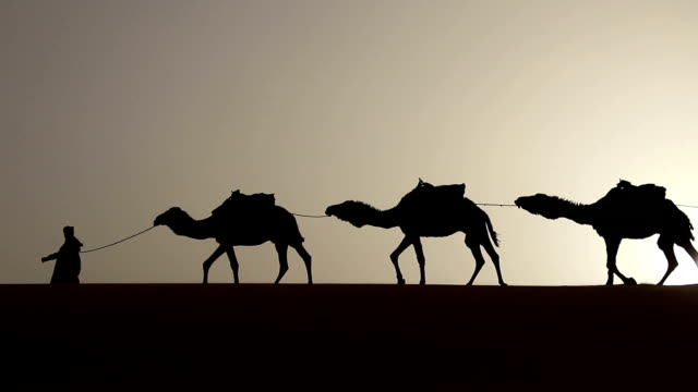 Arabic traditional headdress robe walking with his camels in the desert sand dunes silhouette sunset video