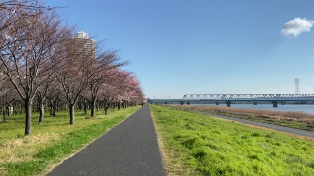 Arakawa River Cherry blossoms in Japan Tokyo Arakawa River Cherry blossoms in Japan Tokyo riverbank stock videos & royalty-free footage
